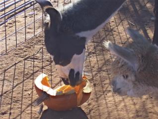 Maya Eating Pumpkin
