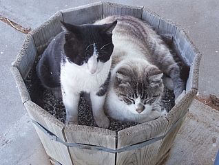 Cats Growing in Our Plant Containers