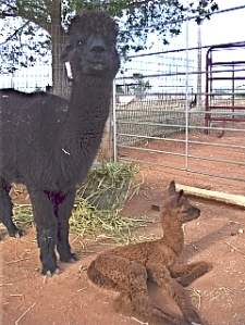 Queen and her New Cria