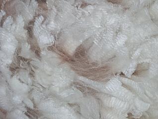 Blast's Fleece