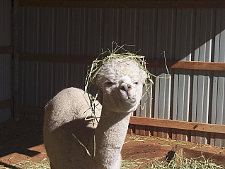 Rose Marie in her lovely hay hat