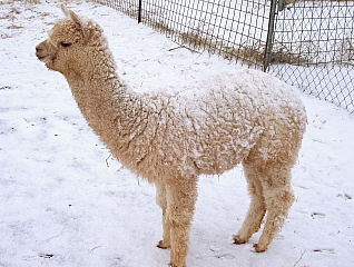 A Snow Crusted Chandra