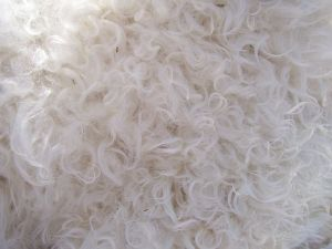 A Close Up of Willow's Cria's Fleece - if only you could feel it!