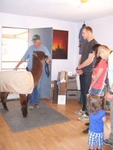 Buck Comes Into The Studio at Open Farm Day