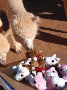 Pacabuddies and a paca